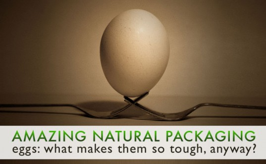 Amazing Natural Packaging: Eggs – What Makes Them So Tough Anyway