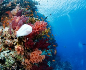 plastic-bag-reef-hawaii-537x442