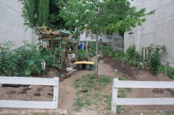 Saving Urban Gardens