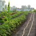 One of the world's largest rooftop farms is in Brooklyn