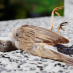 Small Town Terror: Birds Falling from Sky Near Former Chemical Site in Michigan
