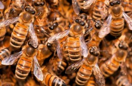 8 years later: the state of the bees