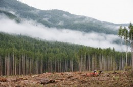 Canada Tops The World In Forest Degradation Thanks To Climate Change, Logging And Energy Development