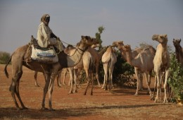 Climate Renews Famine Risk to Africa's Sahel