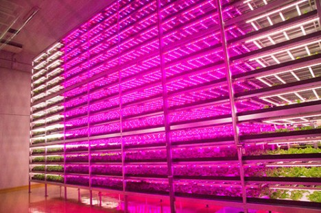 indoor-future-led-farming-468x311
