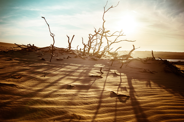 barren_landscape
