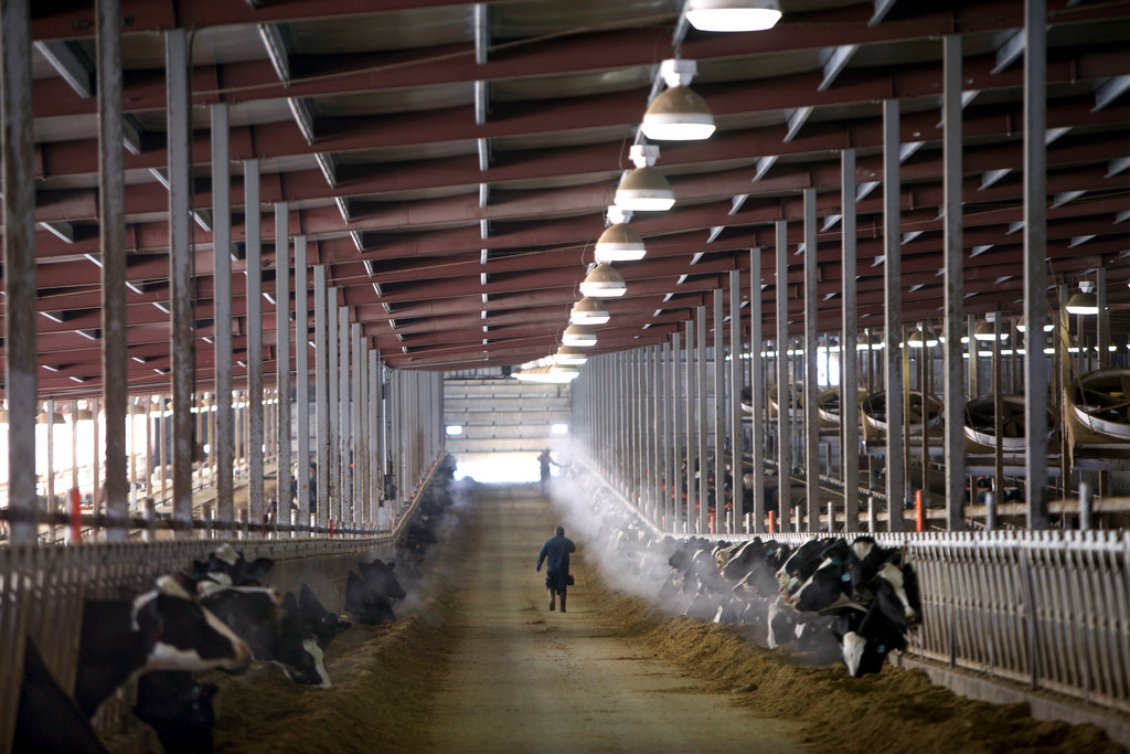 Business plan for dairy industry - How to Write a Small Farm
