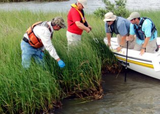 dwh-bp-spill-gulf-marsh-restoration-in-boat