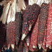 Four Ways Mexico's Indigenous Farmers Are Practicing the Agriculture of the Future