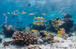 CLIMATE CHANGE IS DRIVING OCEAN OXYGEN LEVELS DOWN, AND THAT'S A BIG PROBLEM FOR MARINE ECOSYSTEMS